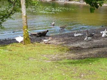 The resident of Loch Lomond